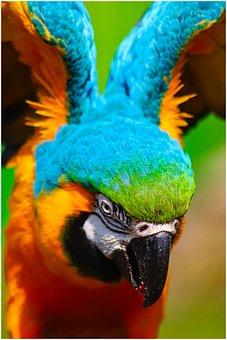 Ara, Parrot, Bird, Plumage, Bill, Color