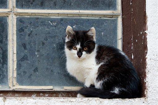 Cat, Kitten, Pet, Domestic Cat, Sweet, Young, Portrait