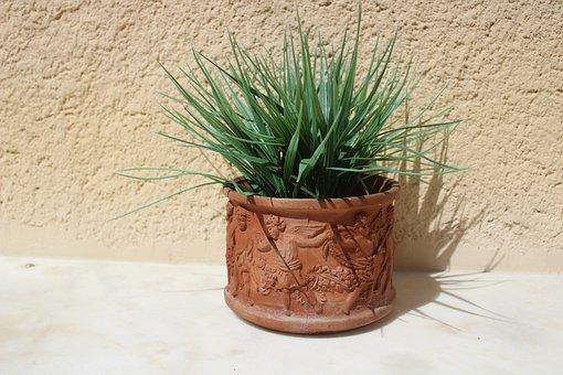 Fresh Green Plant, Clay Jar, Center Table, Jar