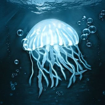 Jellyfish, Underwater, Ocean, Sea