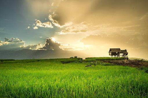 Rice, Sunset, Rain, Land, Terraces, Clouds, Local