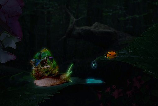 Snail, Insect, Beetle, Chameleon, Drop Of Water, Glow