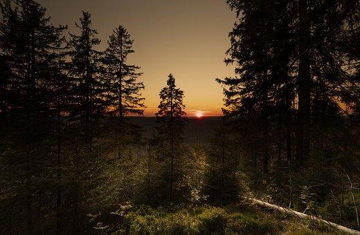 Sunrise, Black Forest, Summer, Light, Gold, Sunshine