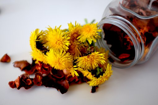 Dandelions, Yellow, Flowers, Spring, Dandelion, Meadow