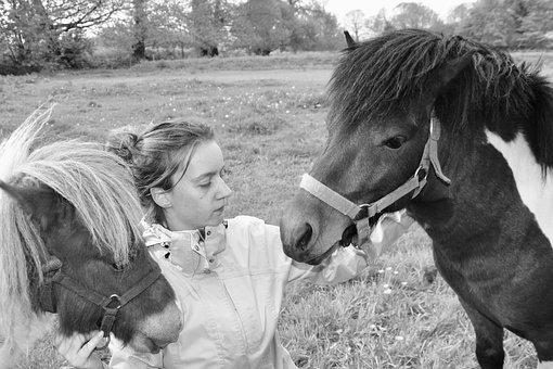 Shetland Ponies, Girl, Black And White Photo