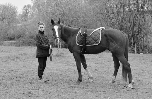 Horse, Black And White Photo, Horse And Rider