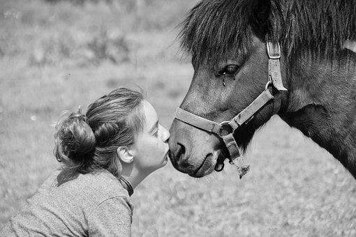 Shetland Pony, Black And White Photo
