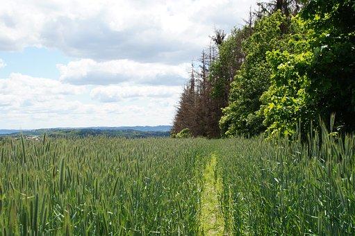 Field, Grain, Landscape, Spring, Green, Trees, Forest