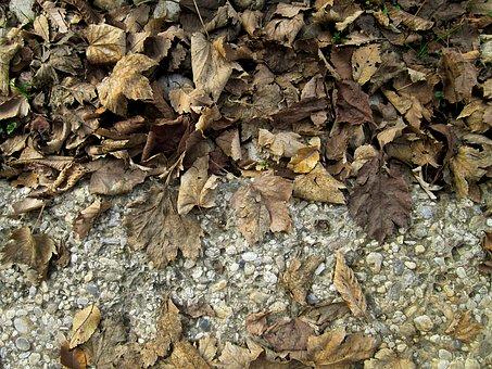 Dry Leaves, Autumn, Fall, Dry, Nature, Season, Leaves