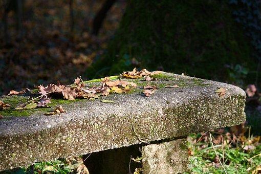 Bench, Autumn, Leaf, Nature, Prato, Garden