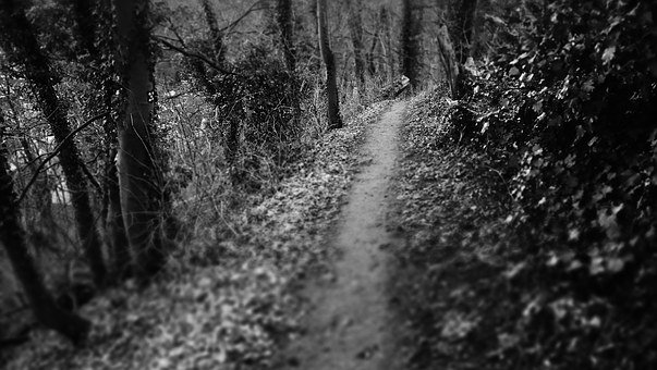 Dark Path, Path, Woods, Mysterious, Mysterious Path