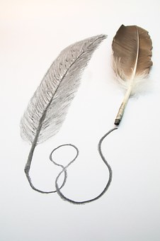 Feather, Drawing, Charcoal Pencil