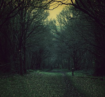 Spooky, Path, Nature, Woods, Dusk, Dark, Forest