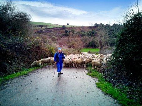 Pastor, Sheep, Field, Flock, Rural, Nature, Landscape