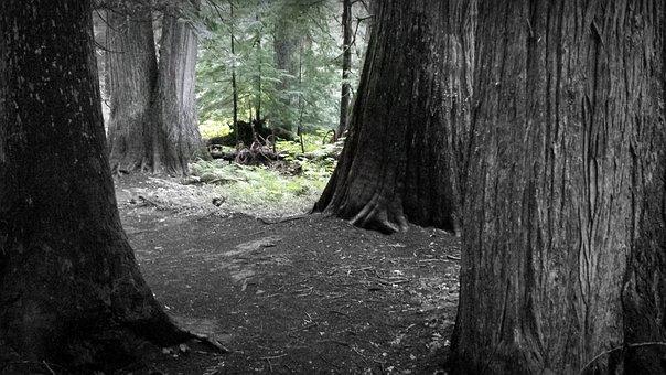 Forest, Dark Forest, Woodland, Eerie, Dark, Evening