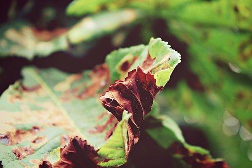 Autumn, Leaves, Fall Foliage, Tree, Green, Fall Leaves