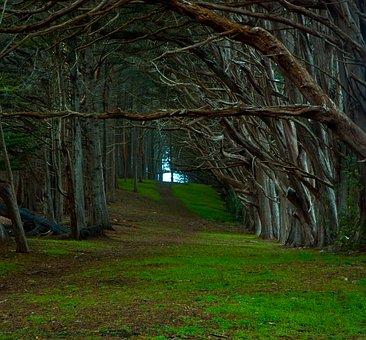 Forest, Enchanted, Fairytale, Landscape, Misty, Woods