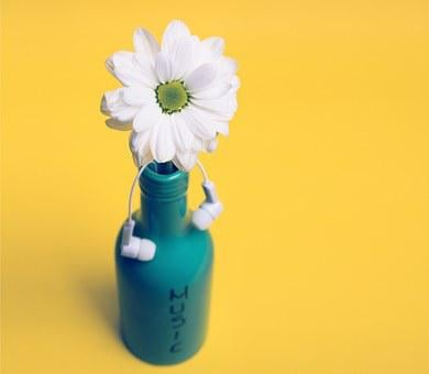 Floral, Jar, Mug, Daisy, Gerber, Petal, Flower, Botany
