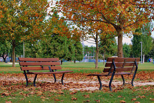 Bench, Autumn, Dried Leaves, Tree, Prato, Nature