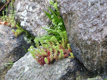 Fern, Moss, Stone Wall, Osaka, Japan, Green, Nature