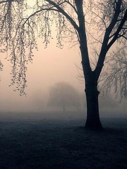 Trees, Spooky, Mist, Park, Nature, Tree, Dark, Scary