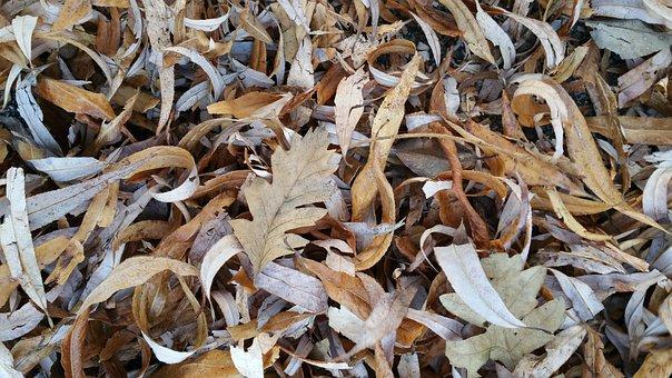 Leaf, Leaves, Dry, Autumn, Road, Plant, Dried Leaves