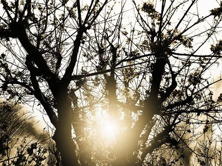Dusk, Tree, Dry, Leave, Branches, Nature, Plant