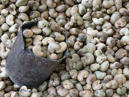 Cashew Nut, Cashew, Roast, Plant, Nut
