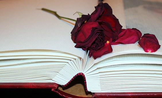 Dried Rose, Rose Petals, Photo Album, Silk Leaves