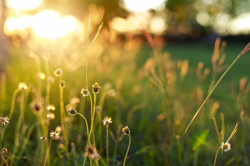 Sunshine, The Evening Sun, Underbrush, Light