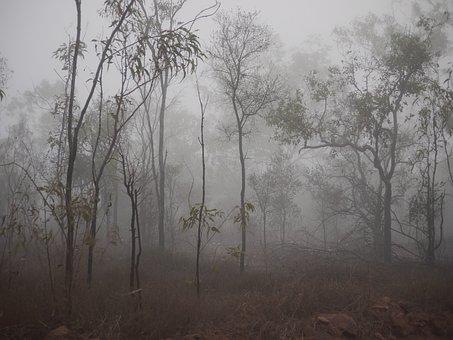 Fog, Spooky, Trees, Mist, Dark, Tree, Nature, Landscape