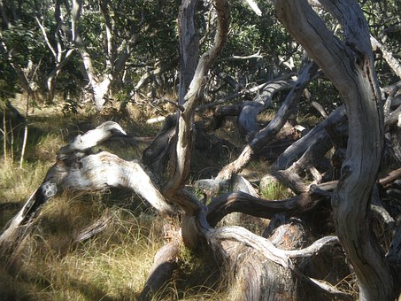 Tree, Twist, Nature, Twisted, Plant, Landscape, Forest