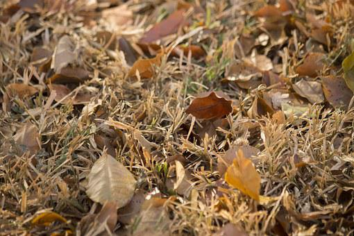 Lawn, Leaves, Dried Leaves, Autumn, Yellow, Grass