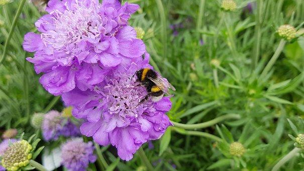 Bumblebee, Pollination, Purple, Flower, Nature, Pollen