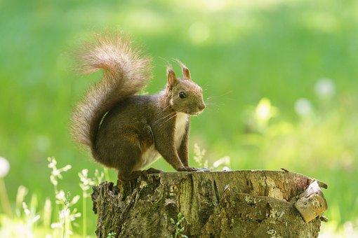 Squirrel, Tokachi, Japan, Hokkaido, Stamp, Background