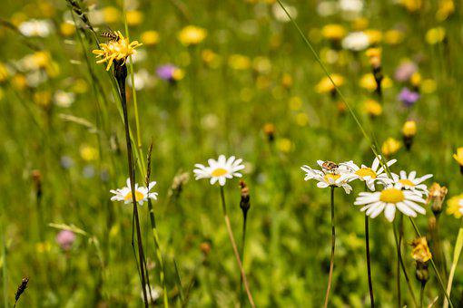 Flower, Bee, Insect, Spring, Nectar, Garden, Summer