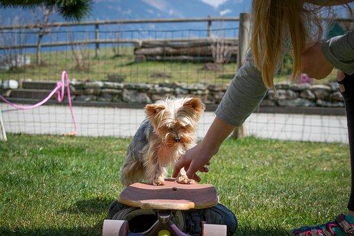 Dog, Dog Training, Education, Training, Learn, Animal