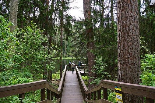 Bridge, Forest, Tree, Water, Pond-water, Nature, Park