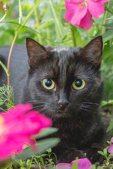 Cat, Black, Portrait, Pet, Animal, Eyes, Grass, Flower