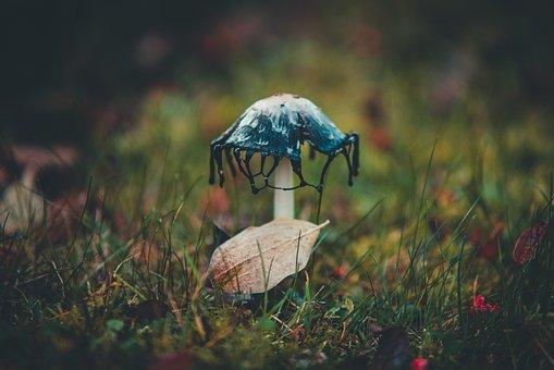Mushroom, Nature, Autumn, Leaf, Gras, Meadow, Forest