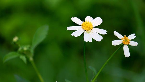 Flower, Park, Fresh Bright, Flower Wall