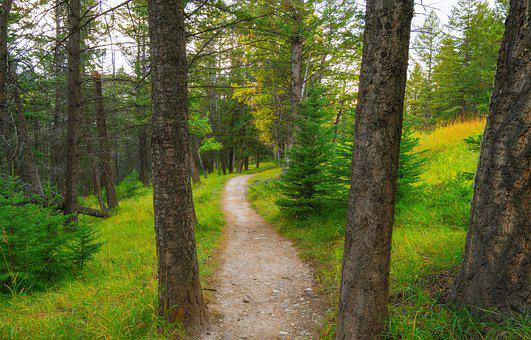 Path, Woods, Trees, Nature, Forest, Trail, Mood