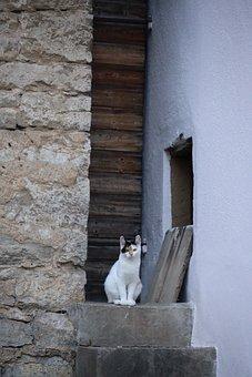 Cat, Animal, Pet, Kitten, Cat'S Eyes