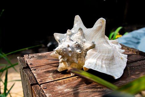 Shell, Wood, Starfish, Maritime, Drift Wood, Vacations