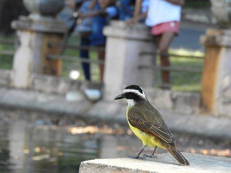 Bird, Birds, Plumage, Amazonas, Freedom, Eagles, Owl