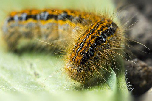 Caterpillar, Larva, Butterfly, Worm, Leaf, Macro