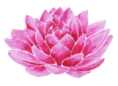 Waterlily, Waterlilies, Lotus, Flower