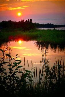 Landscape, Sunset, Nature, Marsh, Trees, Sun, Lake