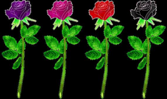 Roses Flowers, Plant, Rose, Gradient, Flowers, Leaf