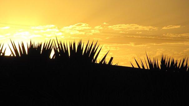 Against Light, Sunset, Sol, Silhouette, Contrast